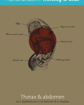 Human-anatomi-thorax-2.-udg.
